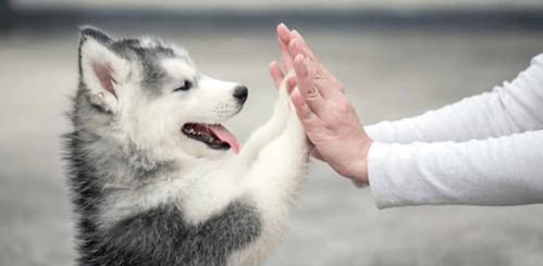 relazione speciale con il cliente